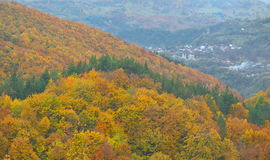 The mountain autumn landscape with colorful forest, in Vrancea,. The mountain autumn landscape with colorful forest Royalty Free Stock Photo