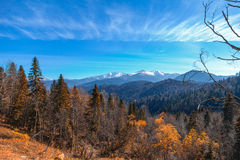 Mountain autumn landscape with orange forest Royalty Free Stock Photos