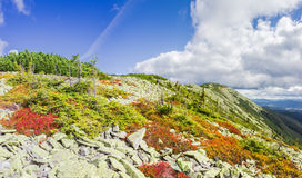 Mountain autumn landscape with the slope of the ridge. Scatterings of stones, low-growing shrubs of bilberries with red leaves, thickets of mountain pine and Stock Photo