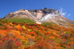 Mountain autumn leaves Royalty Free Stock Images