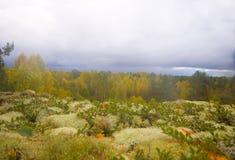 Mountain autumn wood Royalty Free Stock Photos