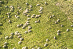 Mountain background with a flock of sheep grazing at the green h Royalty Free Stock Image