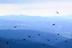 Mountain background and ravens Stock Photo