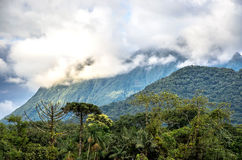 Mountain background with trees, plants, green vegetation and clouds Royalty Free Stock Photo