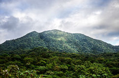 Mountain background with trees, plants, green vegetation and clouds Stock Photos