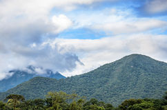 Mountain background with trees, plants, green vegetation and clouds Royalty Free Stock Photos
