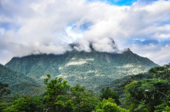 Mountain background with trees, plants, green vegetation and clouds Stock Image