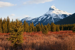 Mountain in Banff National Park, Alberta, Canada royalty free stock photo
