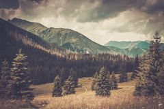 Mountain among beautiful forest Royalty Free Stock Photos