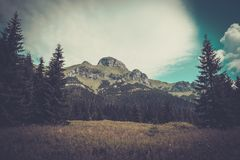 Mountain among beautiful forest Royalty Free Stock Image