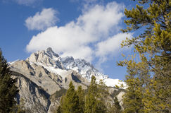 Mountain Beauty. A mountain top as seen from below through the trees in a meadow Stock Photo
