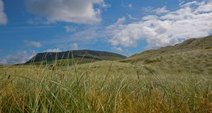 Mountain behind long grass in Sligo Ireland. Mountain seen from low angle behind long grass in Sligo Ireland Stock Photo