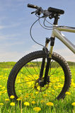 Mountain bike. On dandelion field Royalty Free Stock Images