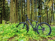 Mountain bike by CUBE in the forest Stock Photo