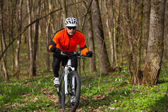 Mountain Bike cyclist riding single track. Sport. Mountain Bike cyclist riding single track in beautifull spring forest Stock Photos