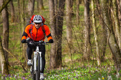 Mountain Bike cyclist riding single track. Sport. Mountain Bike cyclist riding single track in beautifull spring forest Royalty Free Stock Images