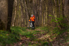 Mountain Bike cyclist riding single track. Sport. Mountain Bike cyclist in orange jersey riding single track in beautifull spring forest Stock Photography