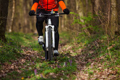 Mountain Bike cyclist riding single track. Sport. Mountain Bike cyclist in orange jersey riding single track in beautifull spring forest Stock Photo
