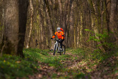 Mountain Bike cyclist riding single track. Sport. Mountain Bike cyclist in orange jersey riding single track in beautifull spring forest Royalty Free Stock Images
