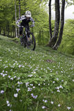 Mountain bike in the forest Royalty Free Stock Images