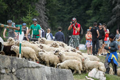 Mountain bike marathon Stock Images