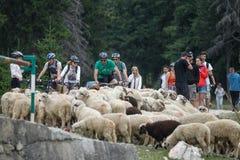 Mountain bike marathon Royalty Free Stock Photos