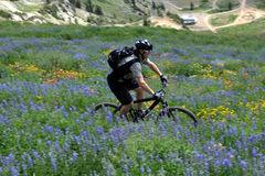 Mountain bike motion. A mountain biker in the mountains on a trail through wildflowers using motion panning for movement Stock Photo