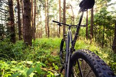 Mountain bike MTB on green summer forest trail, inspirational la Royalty Free Stock Images