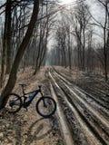 Mountain bike pelo CUBO na floresta foto de stock royalty free