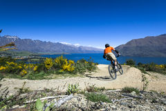 Mountain bike rider on bike path in Queenstown Stock Image