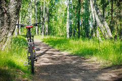 Mountain bike on a road in the woods Royalty Free Stock Images