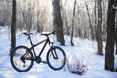 Mountain Bike on the Snowy Trail in the Beautiful Winter Forest Lit by Sun Royalty Free Stock Image