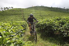 Mountain bike. Sports enthusiasts to explore the mountain bike trail on the slopes Lawu, Karanganyar, Central Java, Indonesia Stock Images