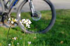 Mountain bike on a spring meadow Royalty Free Stock Photography