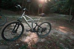 Mountain bike su un sentiero forestale nella sera fotografia stock