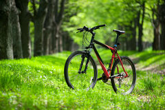 Mountain bike on the trail in the forest Royalty Free Stock Image