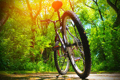 Mountain bike on the trail Stock Images