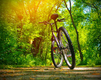 Mountain bike on the trail Royalty Free Stock Image
