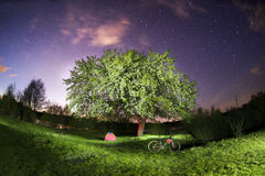 Mountain bike under a blooming tree at night Royalty Free Stock Images