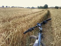 Mountain bike in wheat field Stock Photo