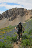 Mountain biker. Zooming past a field of wildflowers royalty free stock photos
