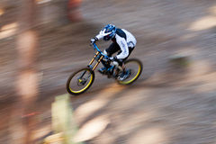 Mountain Biker. A male downhill Mountain Biker goes down the hill amongst the trees at speed royalty free stock photo