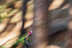 Mountain Biker. A male downhill Mountain Biker goes down the hill and emerges from behind the trees at speed royalty free stock photo