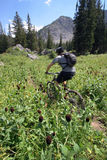 Mountain biker blur. A cross country mountain biker on a trail photograhed with puposeful blur for motion and movement Stock Photography