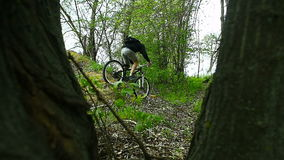 Mountain Biker Cross the Hill in Forest. Spring Forest stock video footage