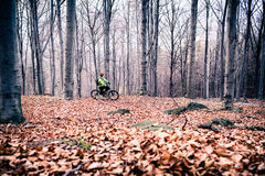 Mountain biker on cycle trail in woods Royalty Free Stock Photography