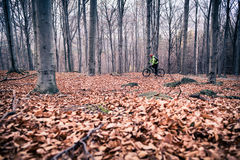 Mountain biker on cycle trail in woods Stock Photo