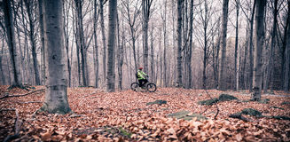 Mountain biker on cycle trail in woods Royalty Free Stock Photo