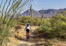 Mountain Biker on Desert trail With Cactus. Mountain Biker on the Latigo trail With Cactus in North Scottsdale Arizona royalty free stock photo