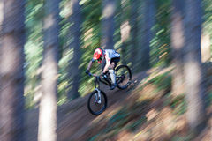 Mountain Biker. A male downhill Mountain Biker goes down the hill and emerges from behind the trees at speed in the sun royalty free stock photos